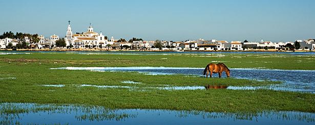 Más de la cuarta parte de la superficie de España se dedica a la conservación de la naturaleza